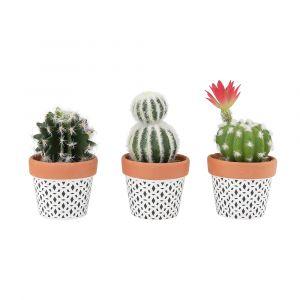 CACTO Cactus in pot 3pcs/set GN