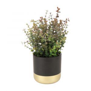 PITA Eucalyptus in pot GN/BK