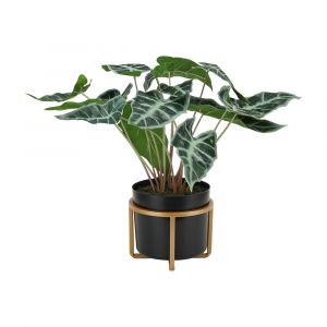PIRRIN Plant in pot GN/BK