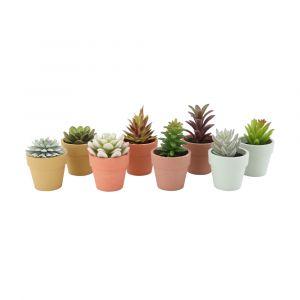 PERRINA Succulent in pot 8 pcs/set MTC
