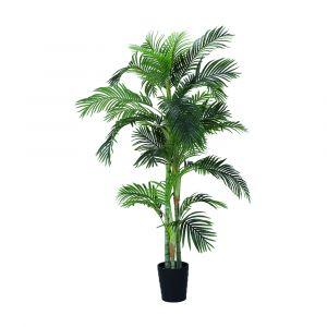 ARESCA Areca palm w/pot H210cm GN