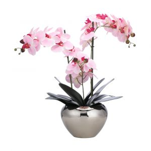 FALEEN Orchid in pot H53cm PK/SV